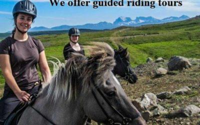 Horse riding in Stóri-Bakki farm