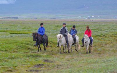 Horse riding tours around Egilsstaðir